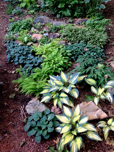 Rock Garden Plants For Shade Shade Gardening Carolyn S Shade Gardens