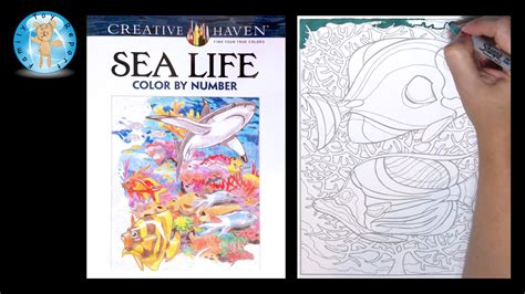 by the numbers books creative sea coloring book color by