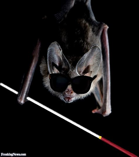 Blind Bats blind as a bat pictures freaking news