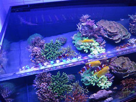 Reef Aquarium Lighting by Led Aquarium Lighting Orphek 10 Steps To Follow