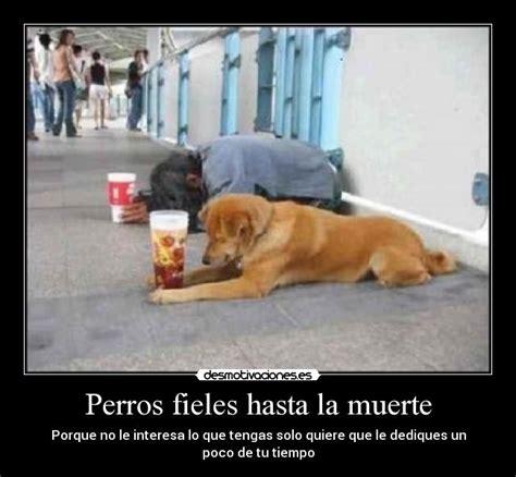 dias de perros el perros el unico ser vivo que te ama mas que a el mismo