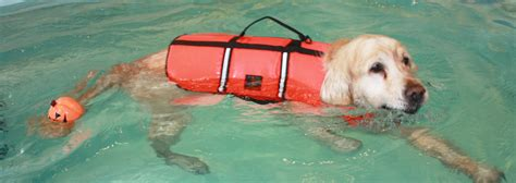 hydrotherapy for dogs cambridge hydrotherapy centre