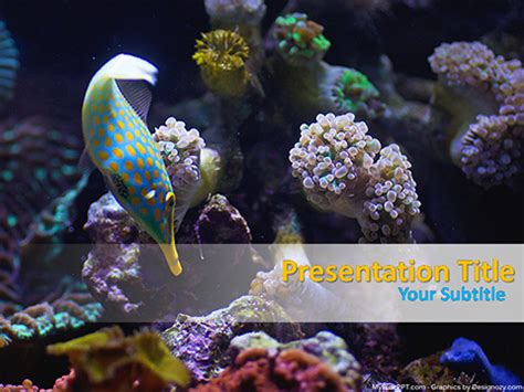 Free Powerpoint Templates Myfreeppt Marine Biology Powerpoint