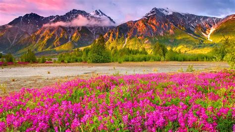 wallpaper flower scenery the most beautiful scenery wallpapers that you will simply