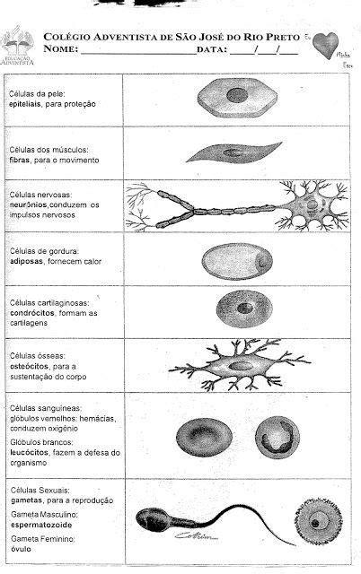 Ideia por guiller em Ciencia | Partes da célula, Enem