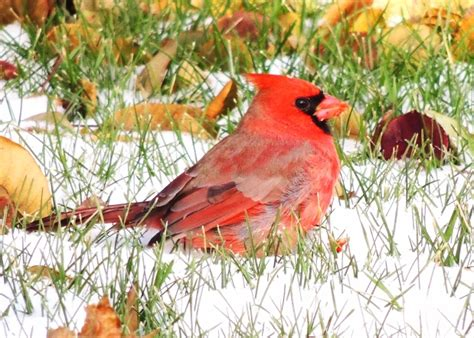 winter weather brings birds to feeders