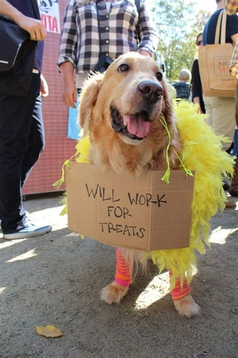 golden retriever costume 12 costumes that prove golden retrievers always win at