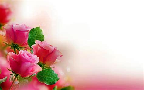 imagenes para fondos de pantalla flores fondos de flores wallpapers hd gratis