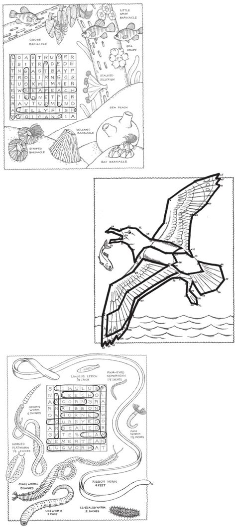 coloring pages euglena euglena coloring pages of coloring pages