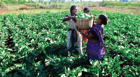 sle business plan vegetable farm how small farmers are revolutionising agriculture rediff