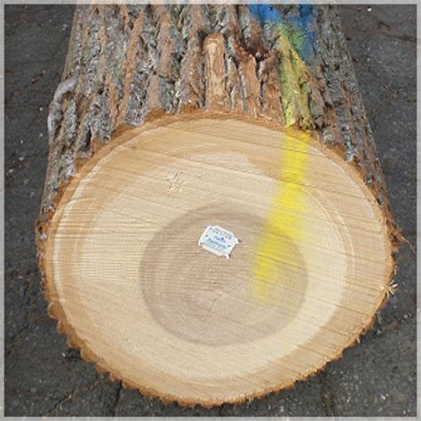 White Poplar Wood Round Logs At Rs 350 Cubic Feet Wood