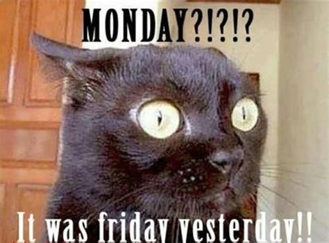 Monday Memes Funny - hilarious funny monday memes to lighten your day