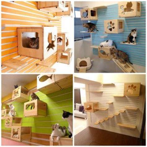 juegos de colocar casas las 25 mejores ideas sobre estantes de pared para gato en