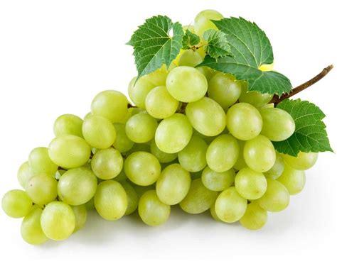 imagenes de uvas con mensajes comprar uva blanca dominga del vinalop 243 en fruta de la sarga