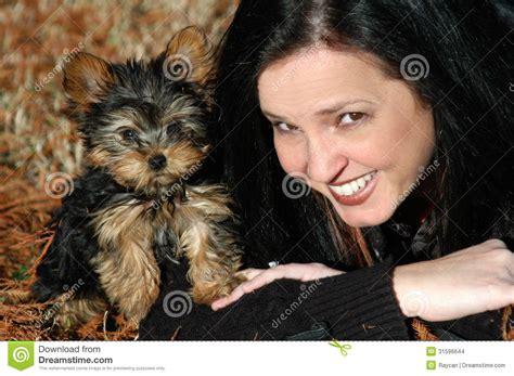 grown miniature yorkie yorkie poo dogs grown breeds picture
