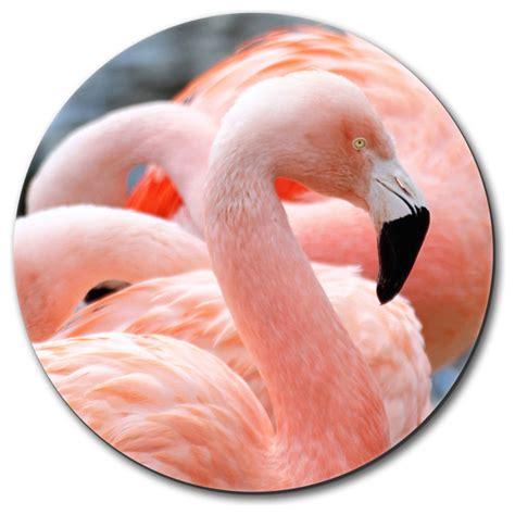 flamingo rubber st proud pink flamingo mouse pad contemporary desk