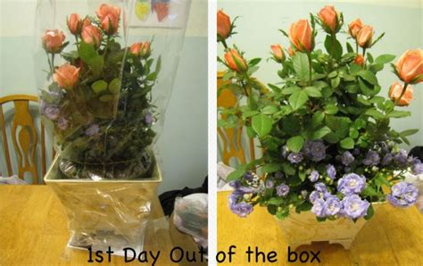 Proflowers Free Vase Promo Code by Proflowers Mother S Day 50 Gift Giveaway The Owl