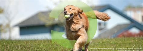 iams puppy treats iams 174 puppy food treats petsmart