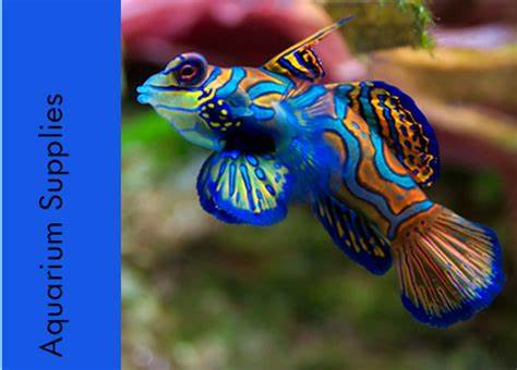 We can supply you with all the essential aquarium and pond supplies