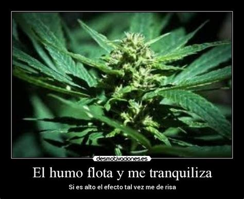 imagenes de weed con frases de amor imagenes y frases de marihuana frases para facebook y