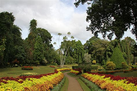 Kandy Botanical Gardens The Royal Botanical Gardens Of Peradeniya Sri Lanka For 91 Days