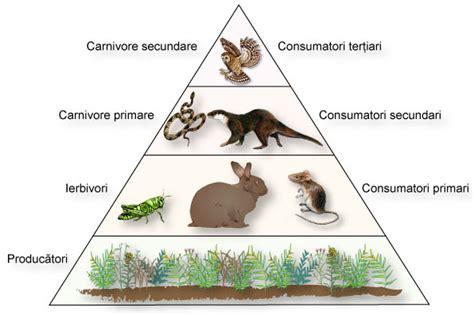 cadena alimenticia pirámide trofica mis apuntes de pcpi2 noviembre 2012