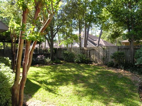 shade trees for small backyards care for your trees and they will help care for your