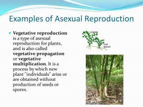 exles of vegetative propagation by roots cellular reproduction ppt