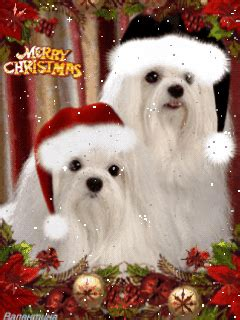merry christmas cute dogs  friends gif christmas puppy merry christmas gif merry