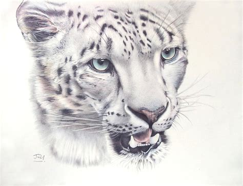 above the clouds snow leopard drawing by jill parry