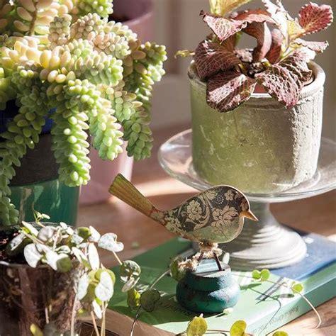 decora con plantas de interior decora con plantas y 161 gana salud decorando casas