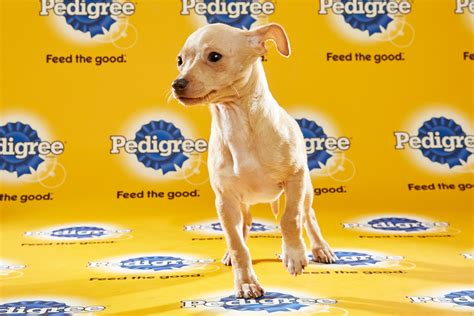 puppy bowl start time puppy bowl xii 2016 tv start time live schedule and draft info