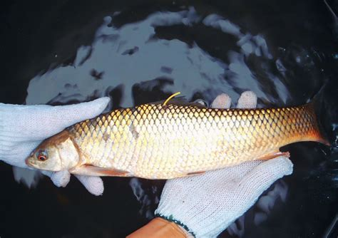 Fish Bio evaluating spillover from fish conservation zones fishbio fisheries research monitoring and