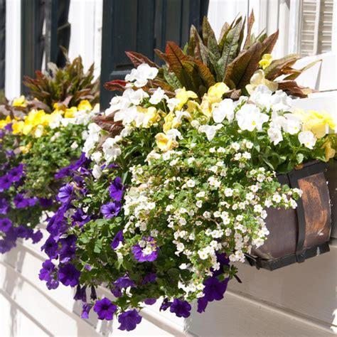 fiori da interni piante annuali e perenni per la casa il balcone e il