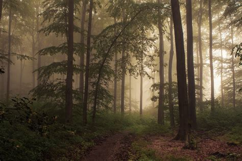 The Woods fog in the woods on a day in the eifel thank you