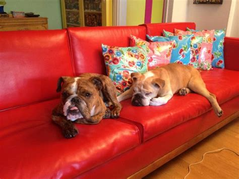 how to get rid of dog hair on couch how to get rid of unwanted pet hair in your home