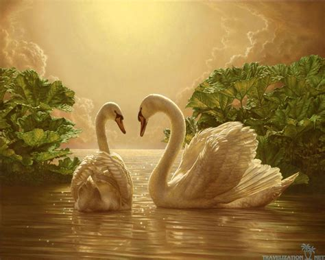 images of love nature love nature wallpapers wallpaper cave