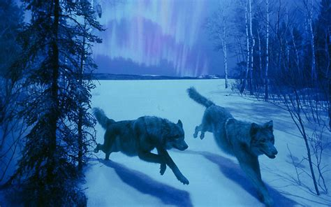 j5 anime themes 29 wolf backgrounds wallpapers images design trends