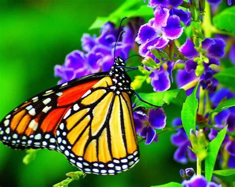 Imagenes Con Mariposas | image gallery hermosas flores con mariposas