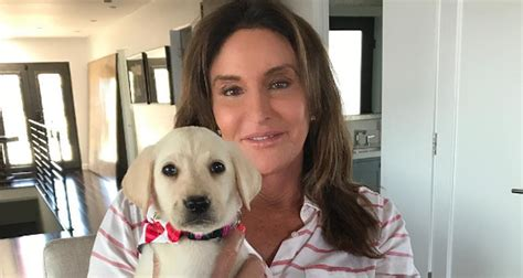 jenner puppy caitlyn jenner has an adorable new puppy meet bertha caitlyn jenner just jared