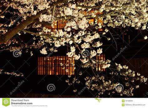 di notte fiore fiore di ciliegia vista di notte kyoto giappone immagine