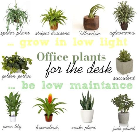 Plant For Office Desk Find A Way By Jwp Low Light And Low Maintance Plants For