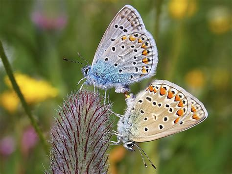 Beautiful Butterfly beautiful butterfly picutres cini