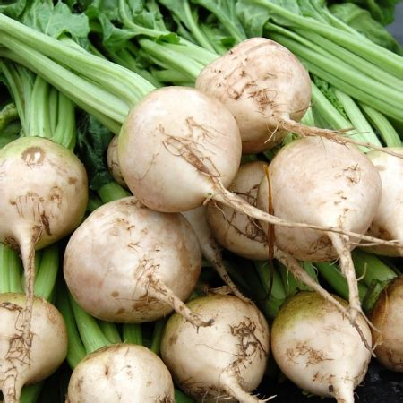 a z vegetables uk beetroot avalanche seeds a z vegetable seeds white