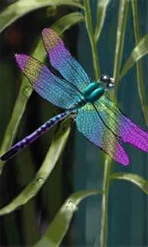 tattoo gallery belleview fl 259 best paintings insects images on pinterest