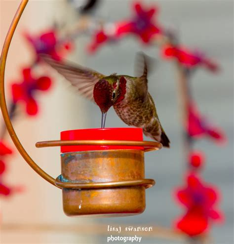 bee proof drip free copper hummingbird feeder by