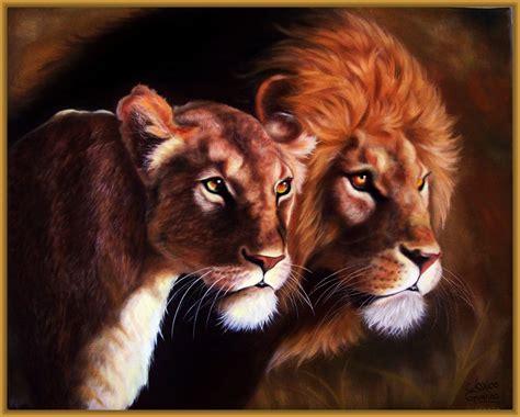 imágenes de leones juntos imagenes de leones para pintar archivos imagenes de leones