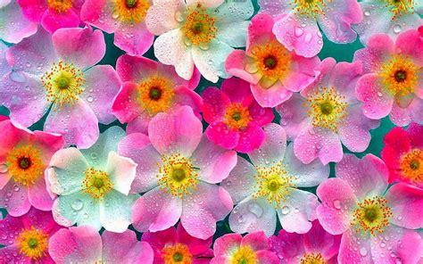 wallpaper bunga cantik deloiz wallpaper