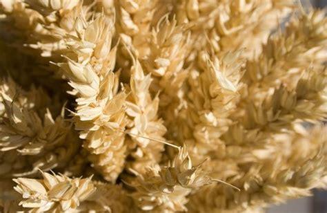 diverticoli alimentazione l alimentazione contro i diverticoli 232 ricca di fibre
