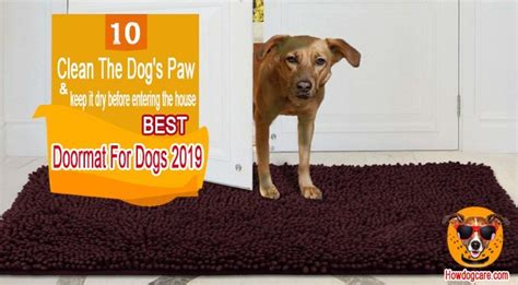 Best Doormat For Dogs by 10 Best Doormat For Dogs To Cleaning Paws 2019